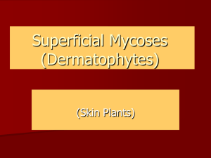 Superficial Mycoses (Dermatophytes) (Skin Plants)