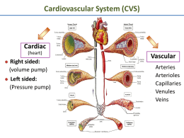 Cardiovascular System (CVS) Cardiac Vascular Arteries