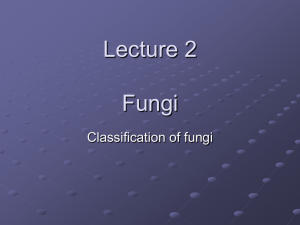 Lecture 2 Fungi Classification of fungi
