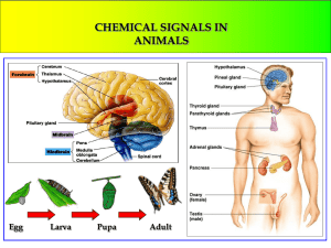 CHEMICAL SIGNALS IN ANIMALS Egg Larva