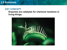 an analysis of the activity of enzymes biological catalysts produced by living cells Enzymes are biological catalysts, or chemicals that speed up the rate of reaction between substances without themselves being consumed in the reaction  all living cells are teeming with enzymes the name comes from the greek meaning 'in leaven' or yeast they are proteins, synthesized in cells, which act as catalysts, causing all the.