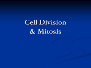 Cell Division and Mitosis