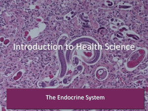 Introduction to Health Science The Endocrine System