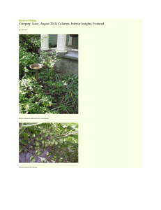 August 2010: Backyard Dining, by Master Gardener Chip Clark