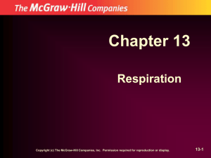 Chapter 13 Respiration 13-1