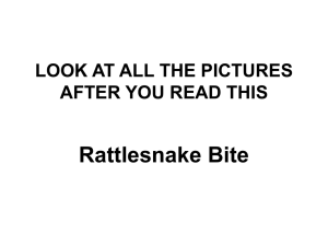 Rattlesnake Bite LOOK AT ALL THE PICTURES AFTER YOU READ THIS