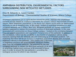 Download AMPHIBIAN DISTRIBUTION: ENVIRONMENTAL FACTORS SURROUNDING NEW MITIGATED WETLANDS