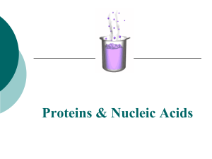10. Proteins and Nucleic Acids PPT