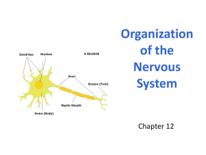 2. Nervous System Organization WEB