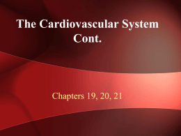 4. Cardiovascular System Cont. WEB