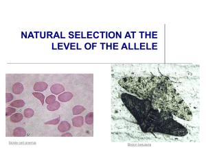 Powerpoint Presentation: Natural Selection and Alleles