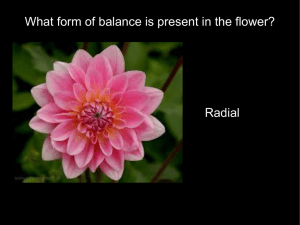 What form of balance is present in the flower? Radial