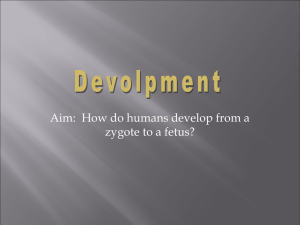 Aim:  How do humans develop from a