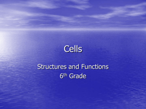 Cells Structures and Functions 6 Grade