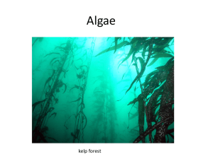 Algae kelp forest