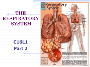 THE RESPIRATORY SYSTEM C16L1