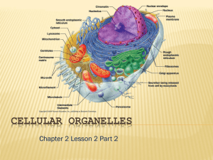 CELLULAR ORGANELLES Chapter 2 Lesson 2 Part 2