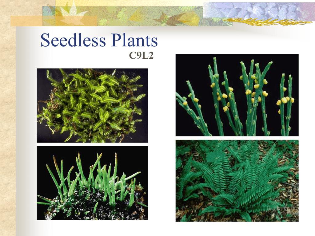 Seedless Plants C9L2
