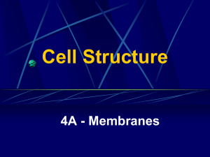 Cell Structure 4A - Membranes