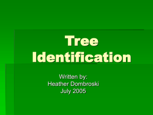 Tree Identification Written by: Heather Dombroski
