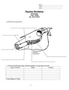 doc Form - The Academy Of Equine Dentistry