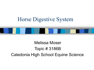 Horse Digestive System Melissa Moser Topic # 3186B Caledonia High School Equine Science