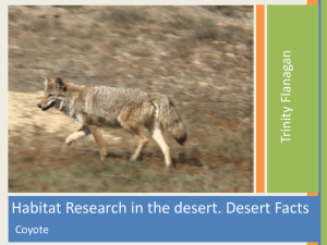 Habitat Research in the desert. Desert Facts an Flanag ty