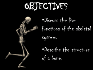 OBJECTIVES •Discuss the five functions of the skeletal system.