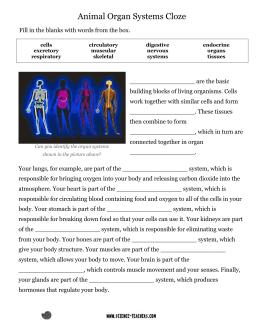 study guide levels of organization and human body systems rh studylib net Skeletal System Study Guide Organ Systems Study Guide