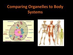 Comparing Organelles to Body Systems