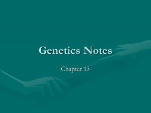 Genetics Notes Chapter 13