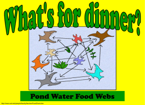 Pond Water Food Webs