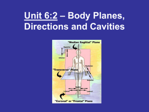– Body Planes, Unit 6:2 Directions and Cavities