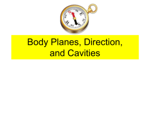 Body Planes, Direction, and Cavities