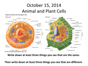 October 15, 2014 Animal and Plant Cells