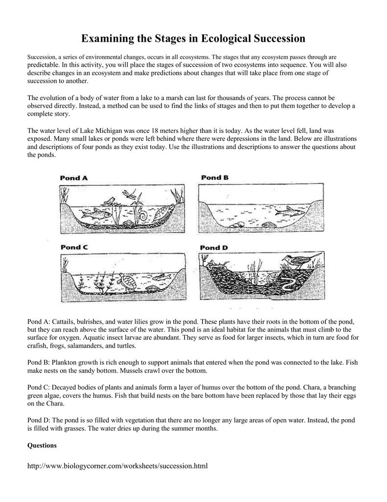 Worksheets Ecological Succession Worksheet examining the stages in ecological succession 015576822 1 ecb9fed97f0a4ea9af0b76f39d243a15 png