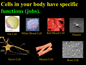 Cells in your body have specific functions (jobs). Red Blood Cell