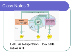 Cellular Respiration Foldable Activity