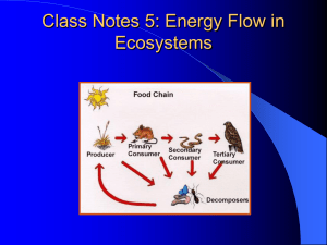 Class Notes 5: Energy Flow in Ecosystems