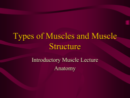 Types of Muscles and Muscle Structure Introductory Muscle Lecture Anatomy