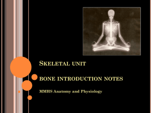 S KELETAL UNIT BONE INTRODUCTION NOTES MMHS Anatomy and Physiology