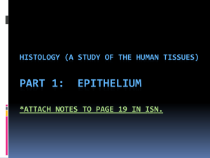 PART 1:  EPITHELIUM HISTOLOGY (A STUDY OF THE HUMAN TISSUES)