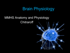 Brain Physiology MMHS Anatomy and Physiology Chitraroff