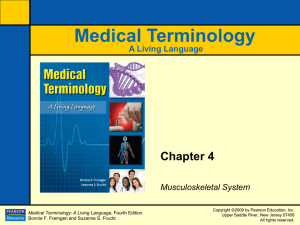 Medical Terminology Chapter 4 A Living Language Musculoskeletal System