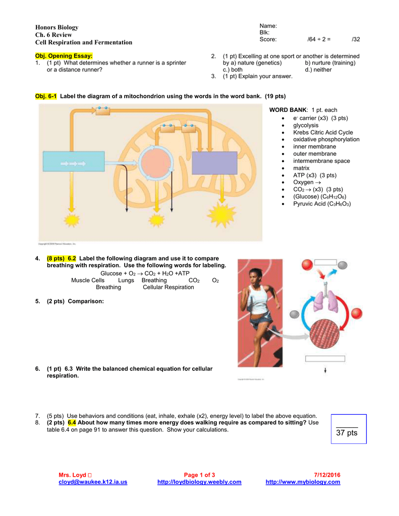 Honors Biology Ch 6 Review Cell Respiration And Fermentation Inhalation Exhalation Diagram Below Is A Of These