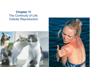 Chapter 11 The Continuity of Life: Cellular Reproduction