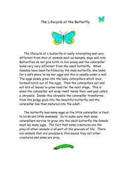 The Lifecycle of the Butterfly