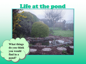 Life at the pond What things do you think you would