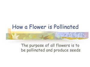 How a Flower is Pollinated be pollinated and produce seeds
