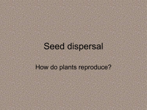Seed dispersal How do plants reproduce?